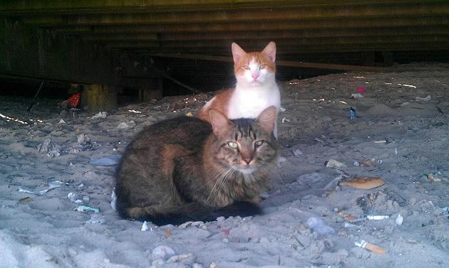 Boardwalk Cats